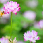 ハチの子サプリメントはどこで売ってる?通販での購入がおすすめな理由